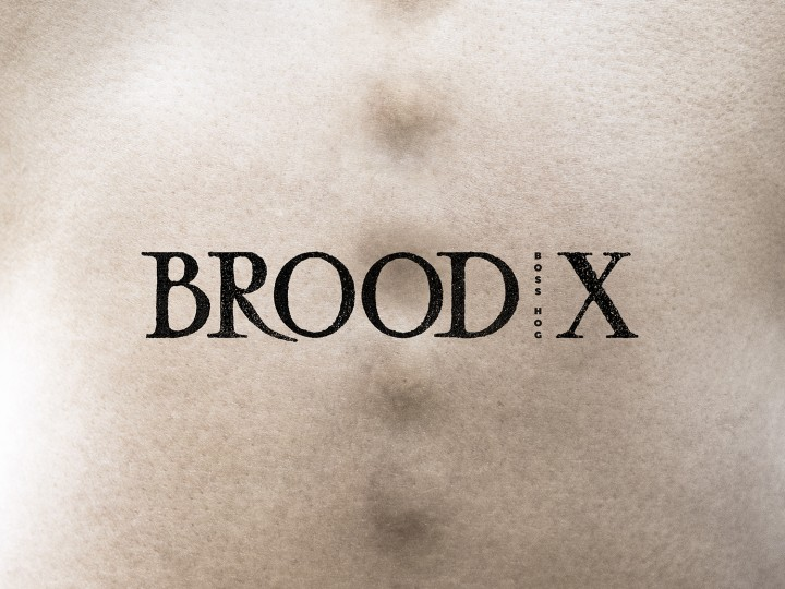 Boss Hog – Brood X